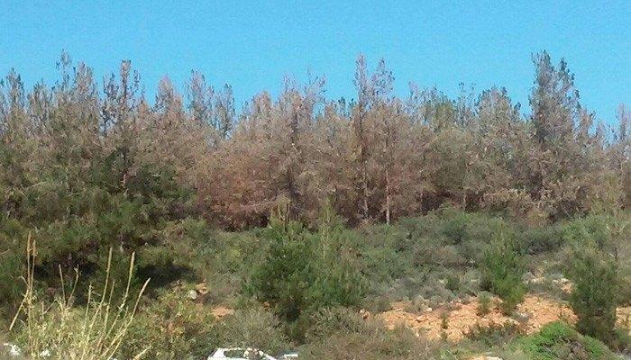 Δράσεις πυροπροστασίας στον Δήμο Αλοννήσου
