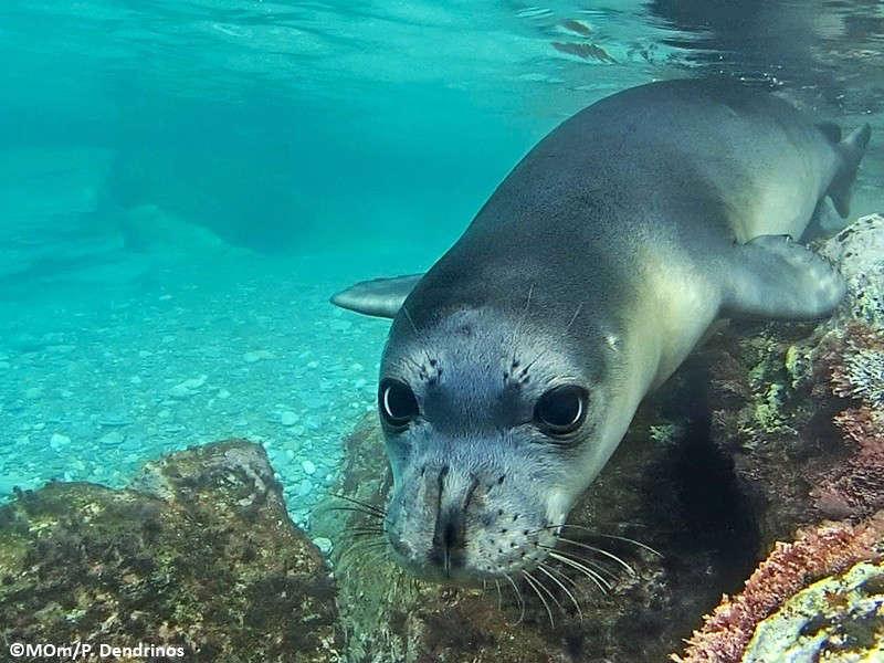 «Φύλακες άγγελοι» του θαλάσσιου πάρκου Αλοννήσου