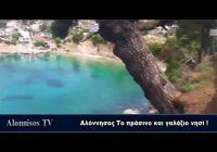 Αλόννησος Το πράσινο και γαλάζιο νησί !